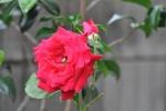 DSC_0614_201505221945521e6.jpg