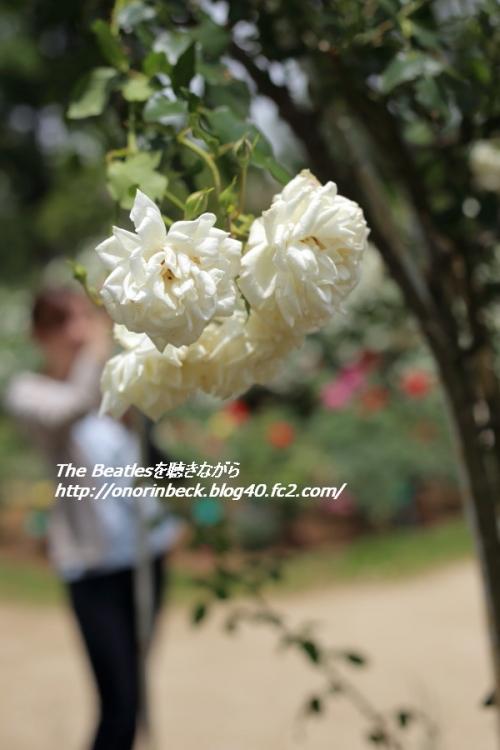 EOS6D_2015_05_23_9999_35.jpg