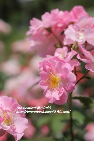 EOS6D_2015_05_23_9999_42.jpg