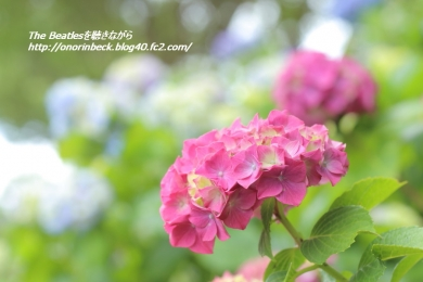 IMG6D_2015_06_06_1370.jpg