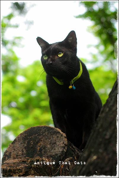 野良猫 Stray cats แมวจรจัด ヲソト猫 タイ Thai ไทย ルンピニ公園 Lumpini park สวนลุมพินี キオスクにゃん