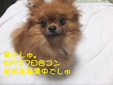 DSCF3010.jpg