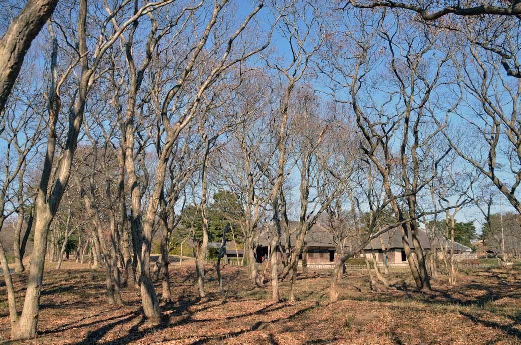 D70_0575冬景色