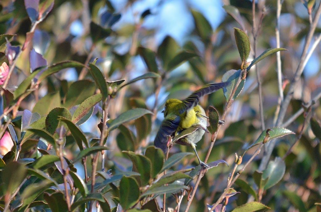 D70_3421近くの鳥