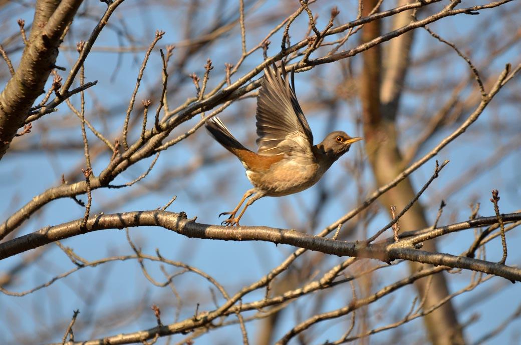 D70_3456近くの鳥