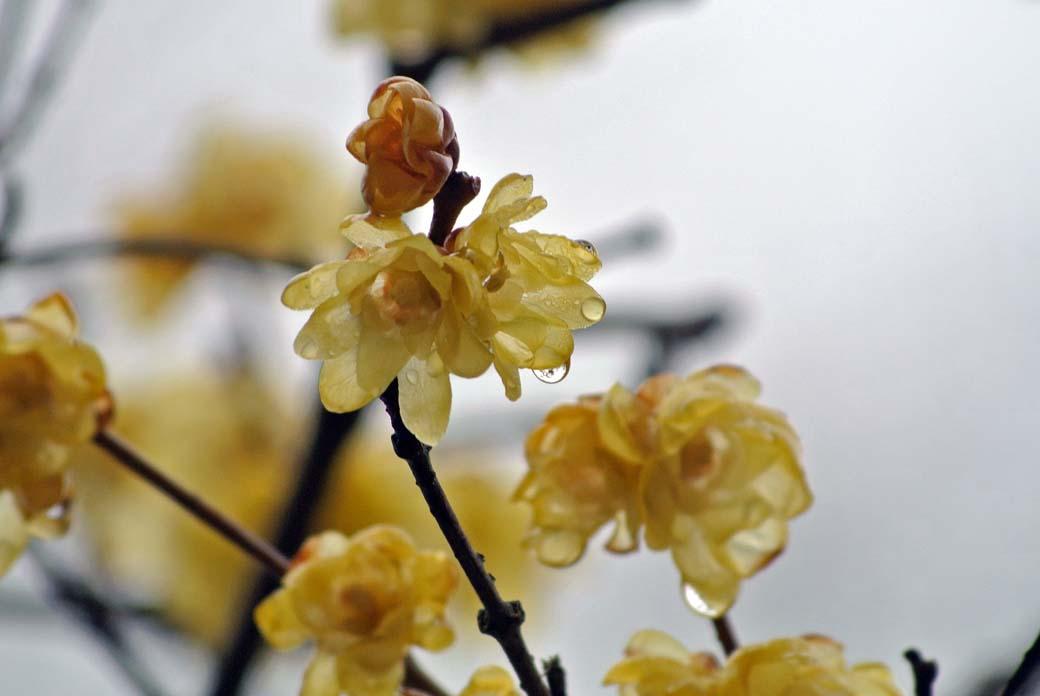 DSC_7001黄色の花