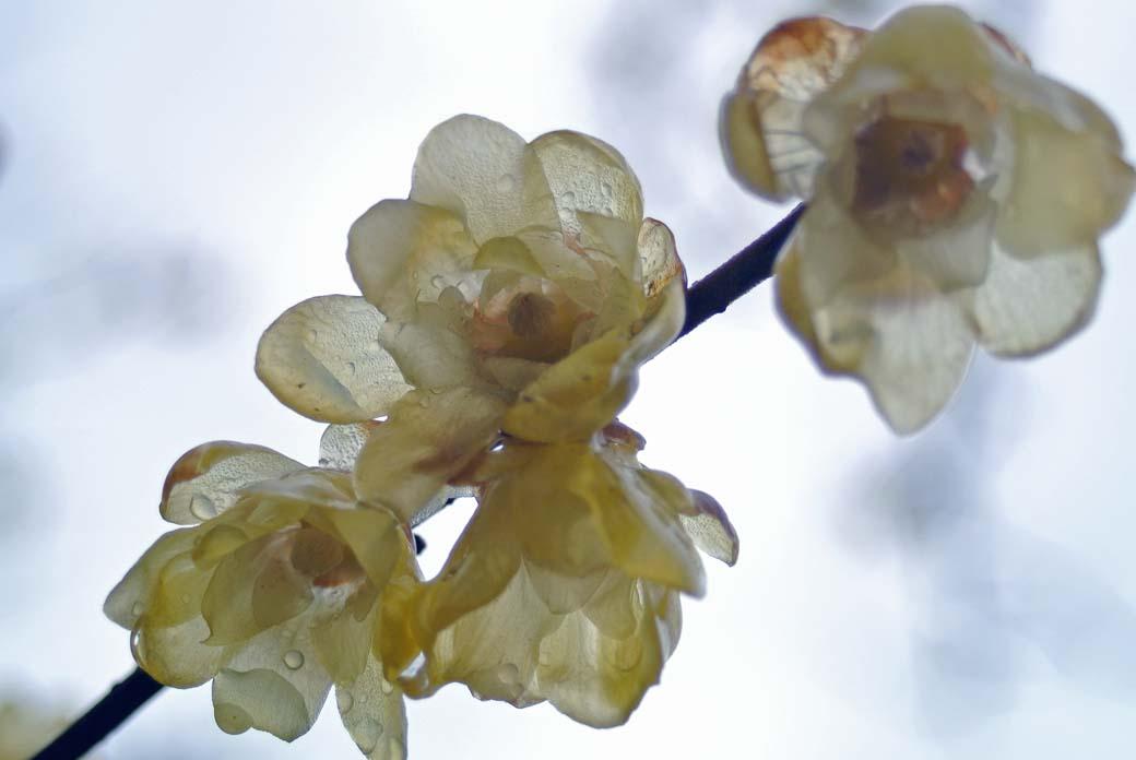 DSC_6699黄色の花