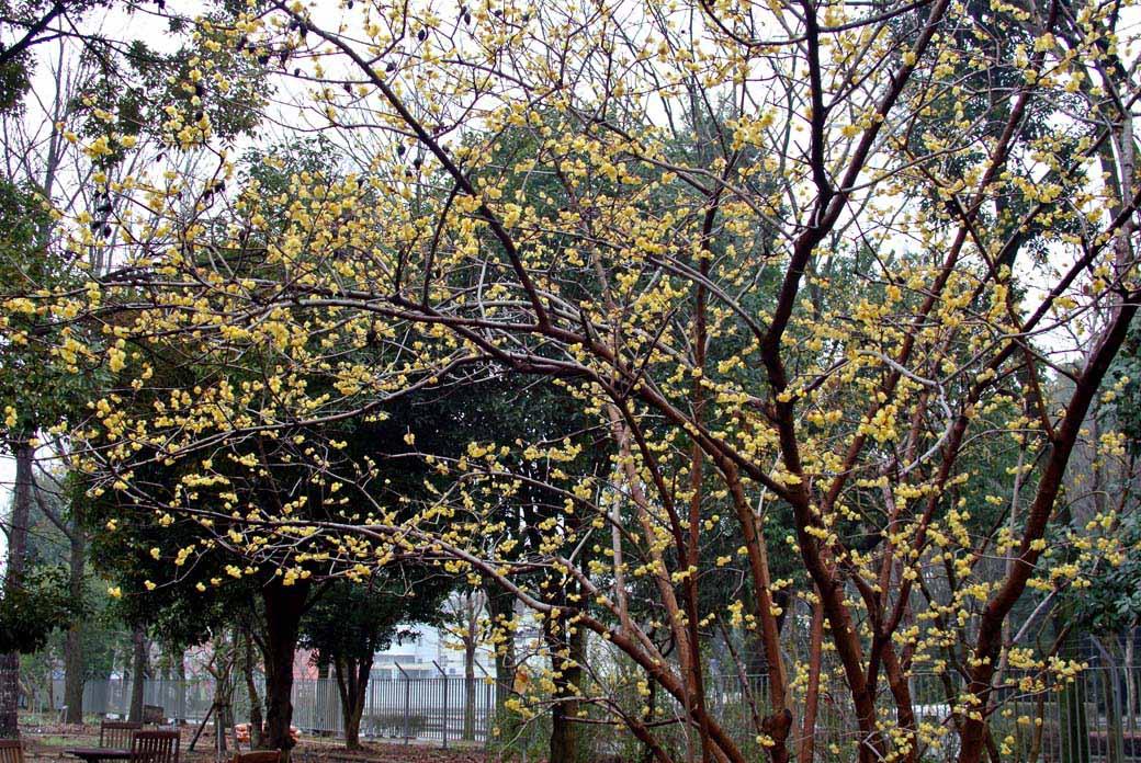 DSC_6701黄色の花