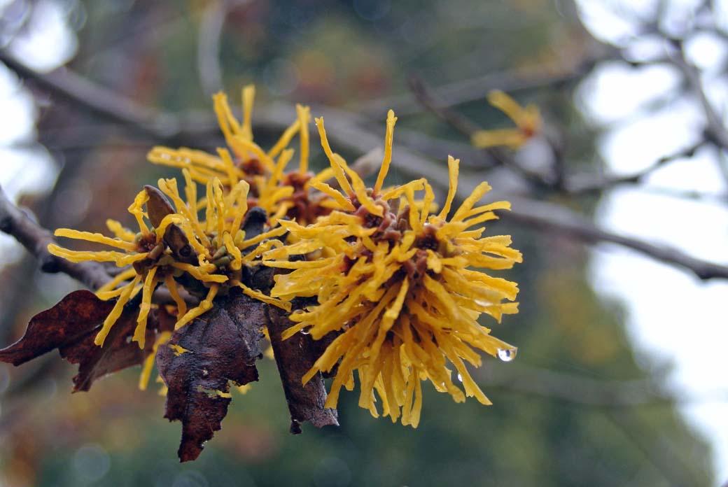 DSC_6703黄色の花