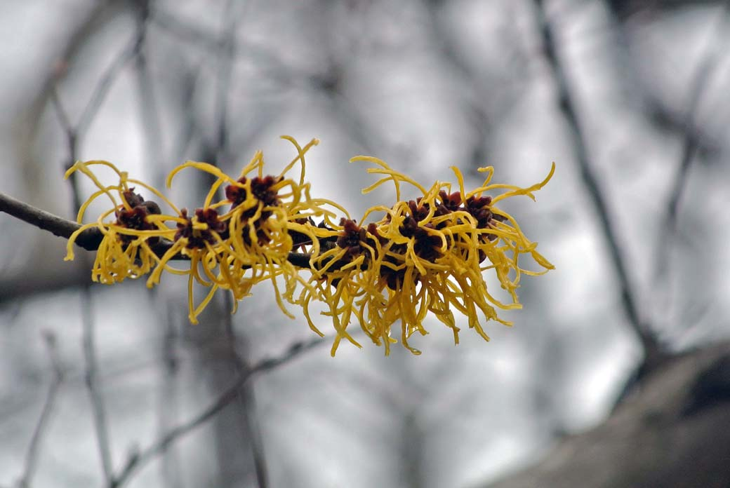 DSC_6985黄色の花