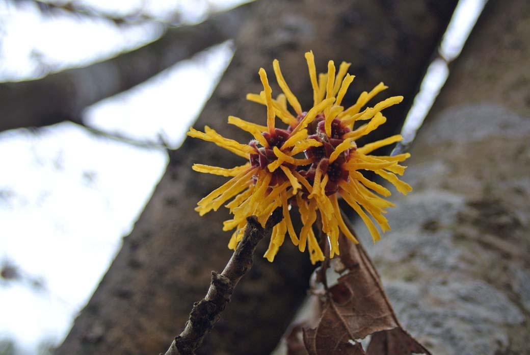 DSC_6726黄色の花