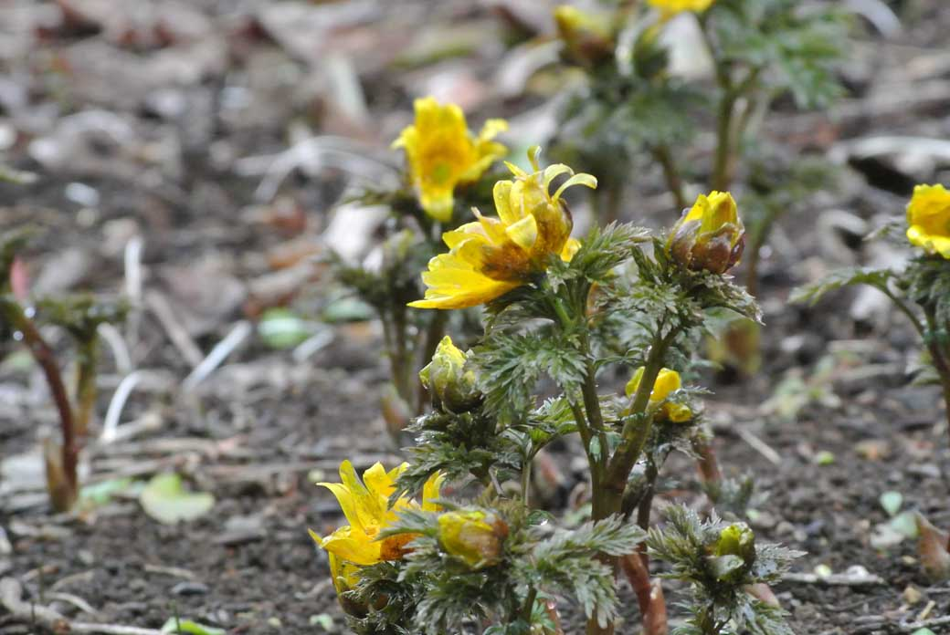 DSC_6851黄色の花