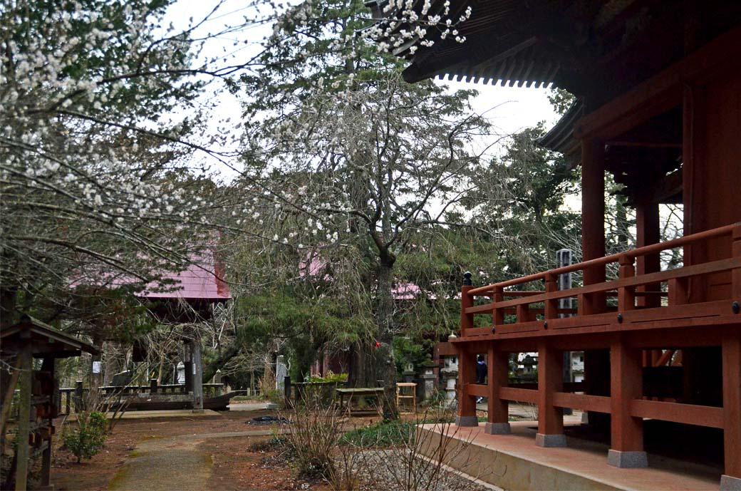 D70_6851松虫寺