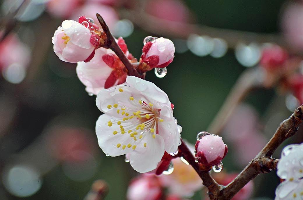 D70_7829春の庭