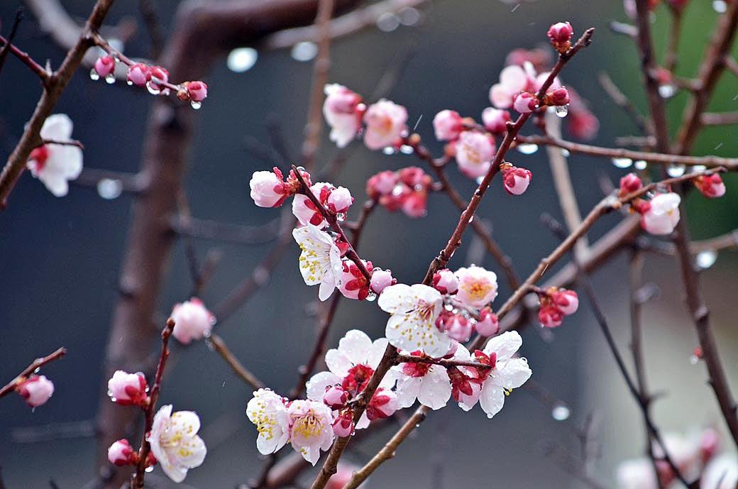 D70_7847春の庭