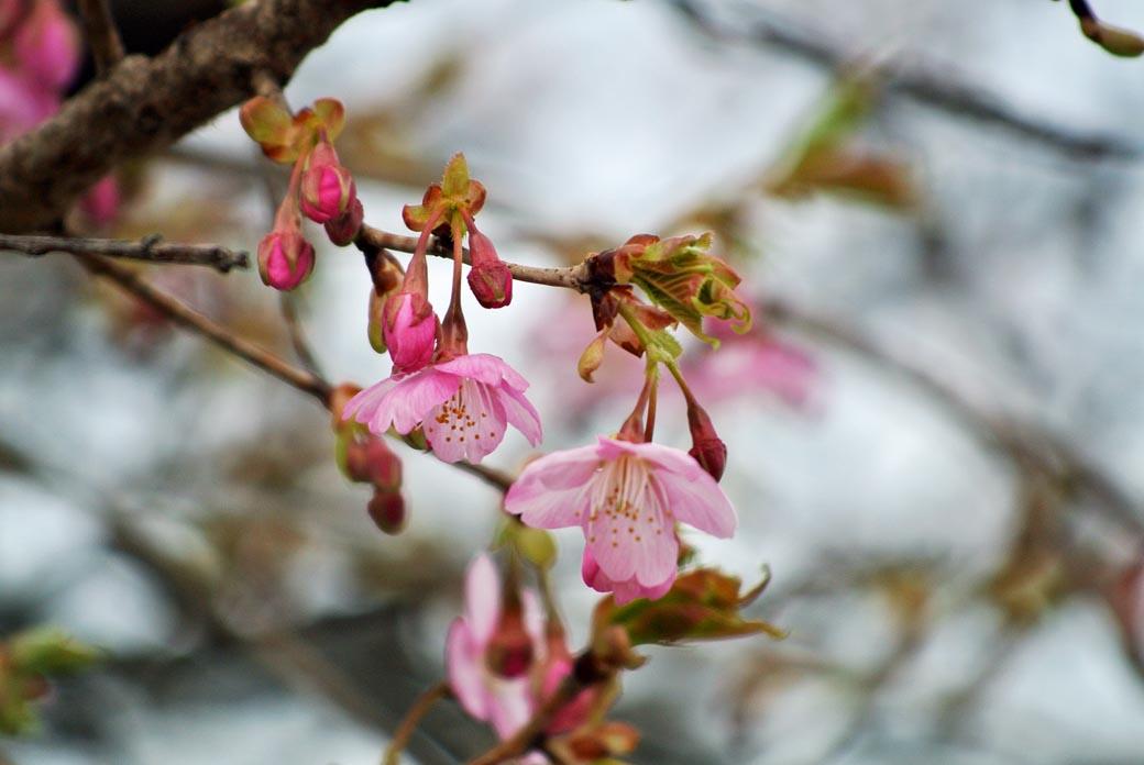 DSC_7230春の庭