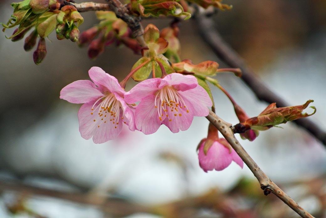 DSC_7231春の庭