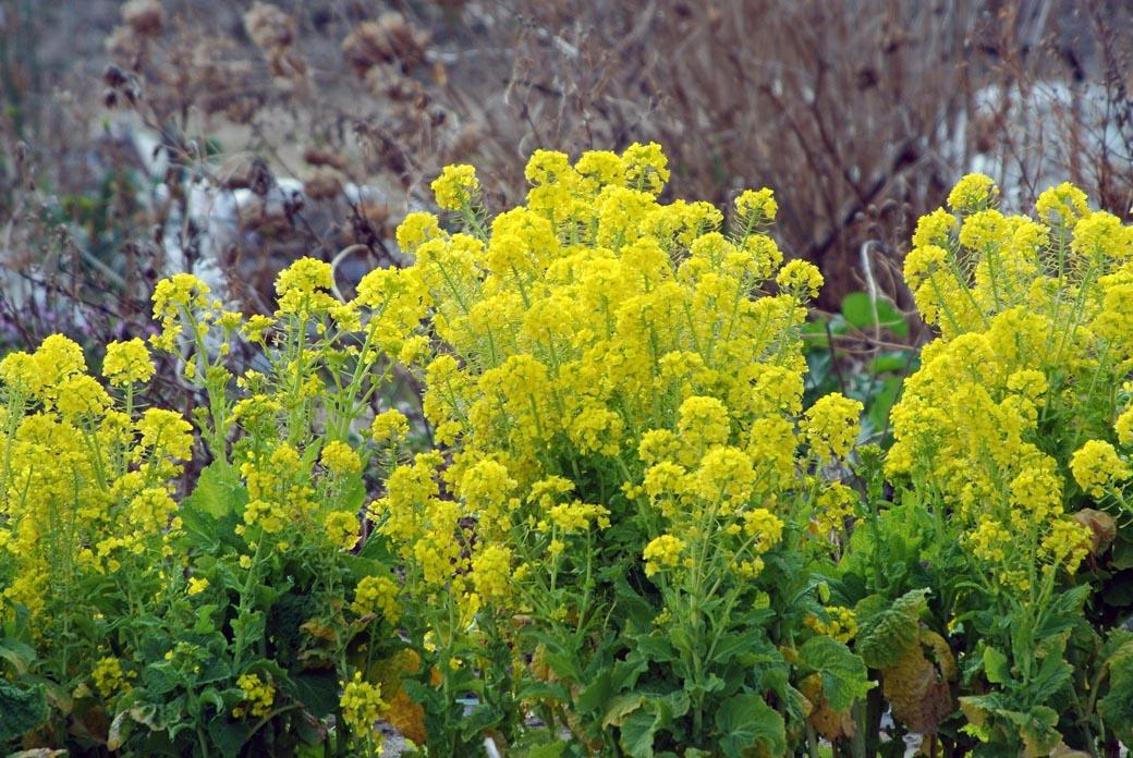 DSC_7236春の庭
