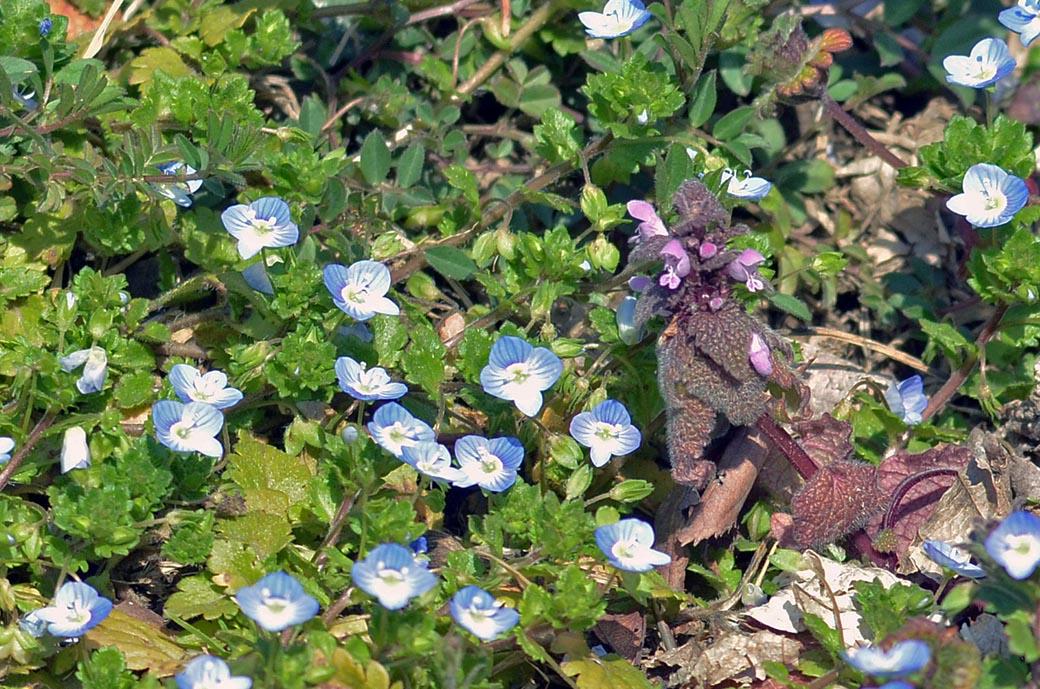 D70_7807春の庭