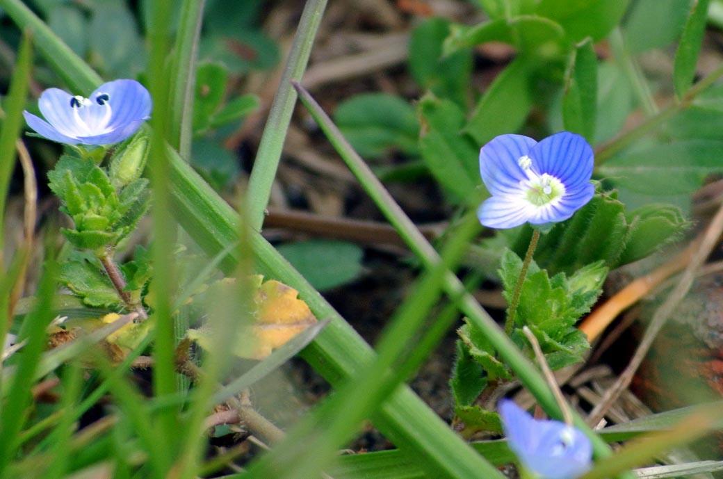 DSC_7242春の庭
