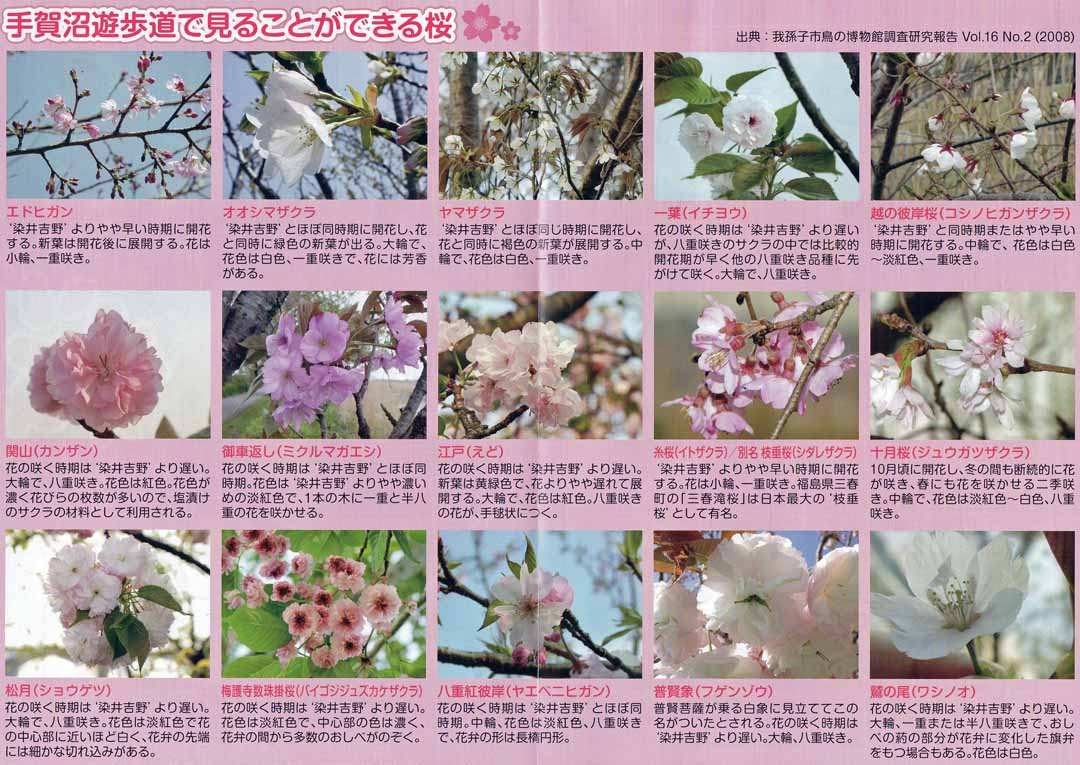img002我孫子の桜