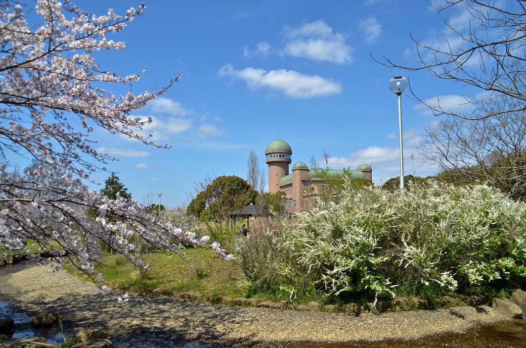 D70_0475手賀沼の桜