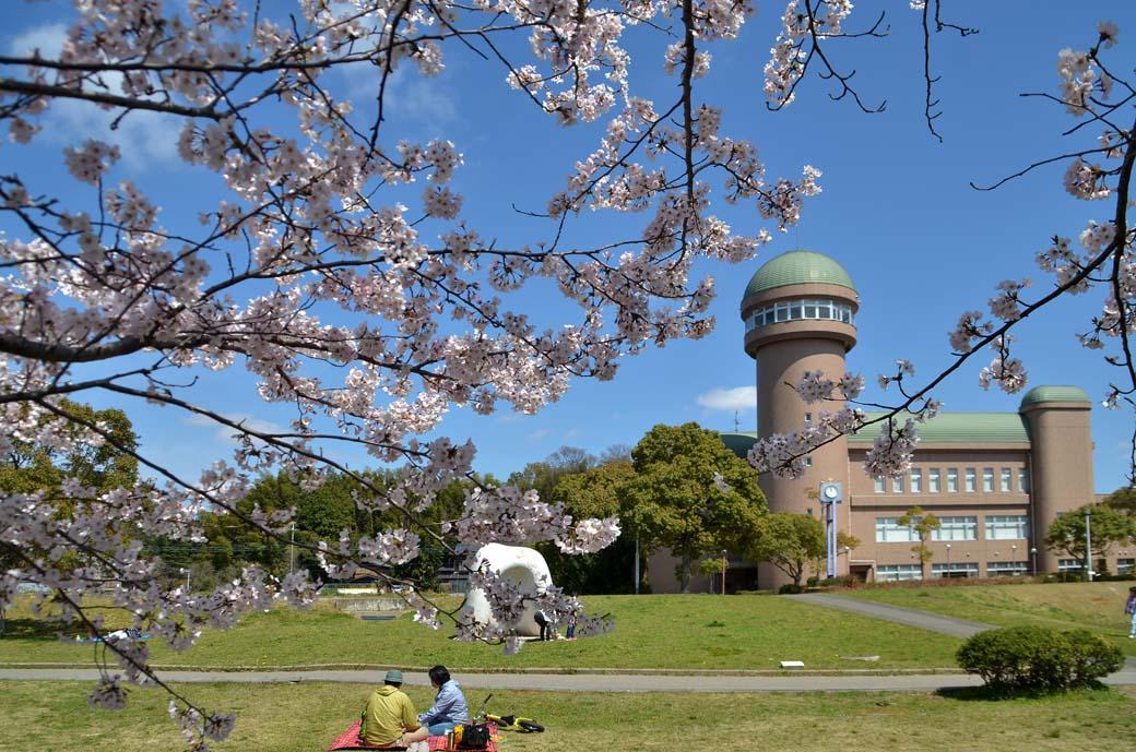 D70_0506手賀沼の桜