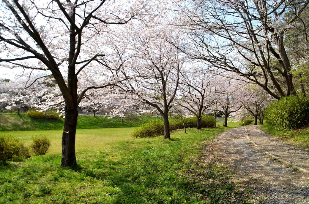 D70_0775布佐の桜
