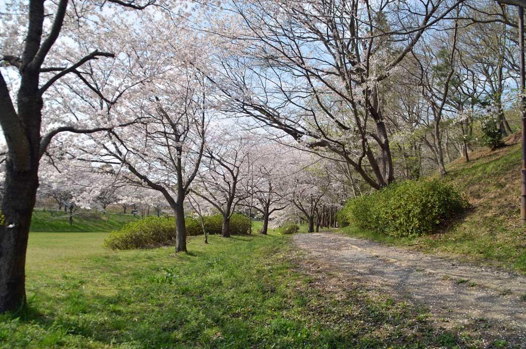 D70_0777布佐の桜