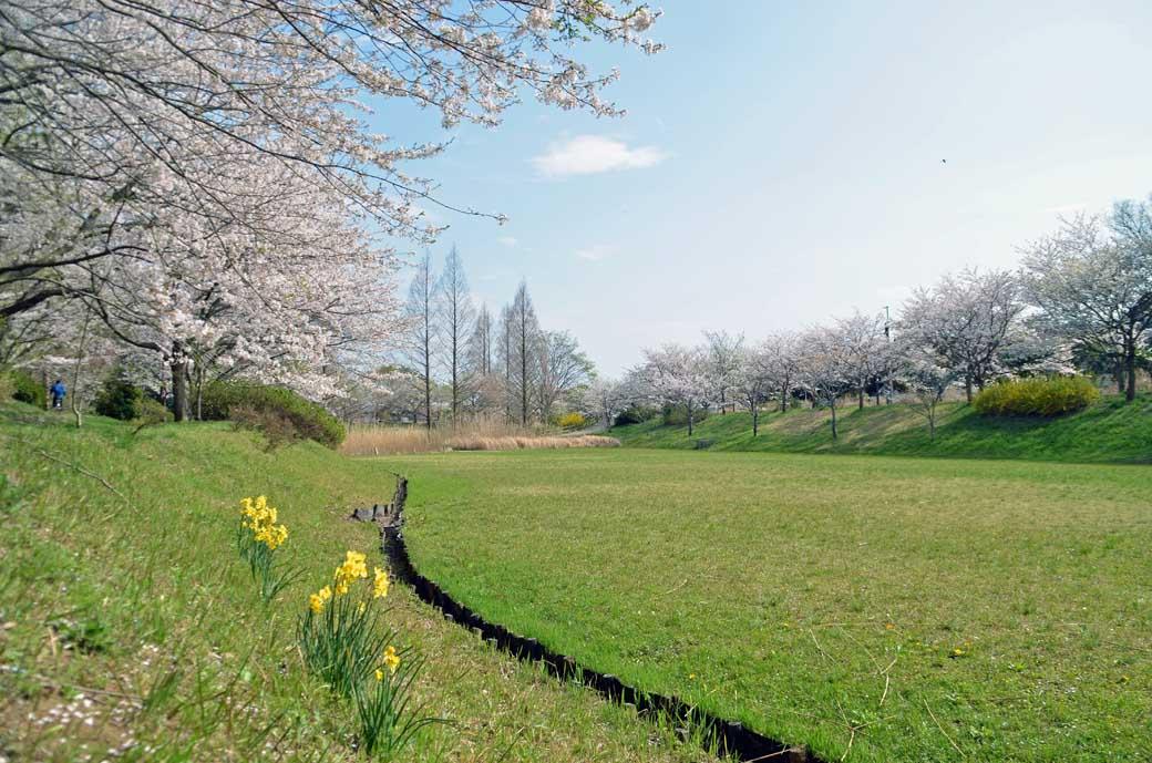 D70_0783布佐の桜