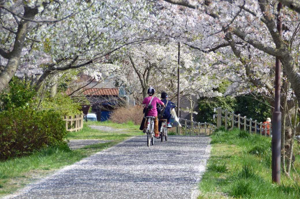 D70_0796布佐の桜