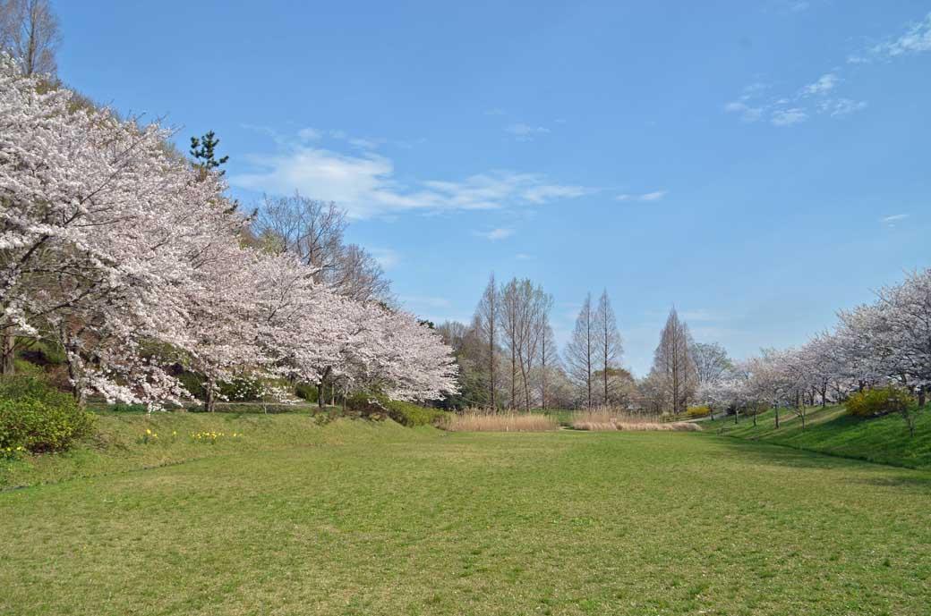 D70_0835布佐の桜