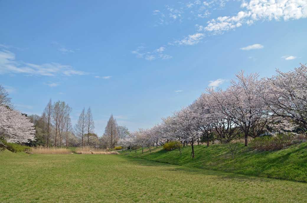 D70_0836布佐の桜