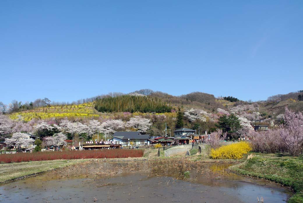DSC_7406花見山