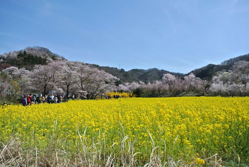 DSC_7418花見山