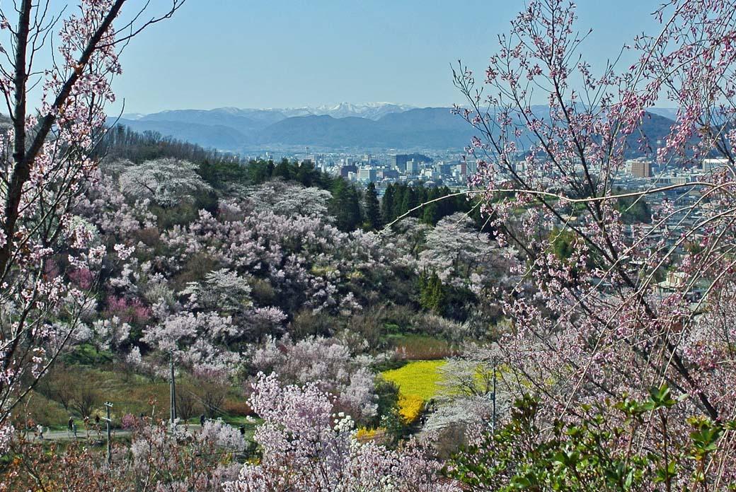 DSC_7476花見山