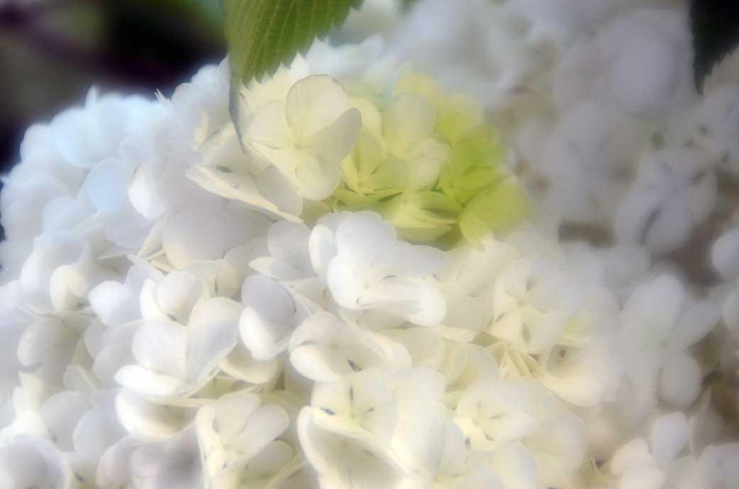 D70_2936庭の花