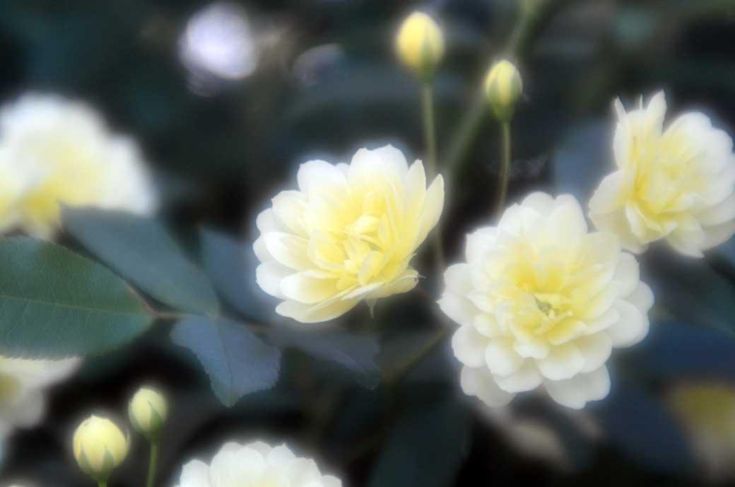 D70_2945庭の花