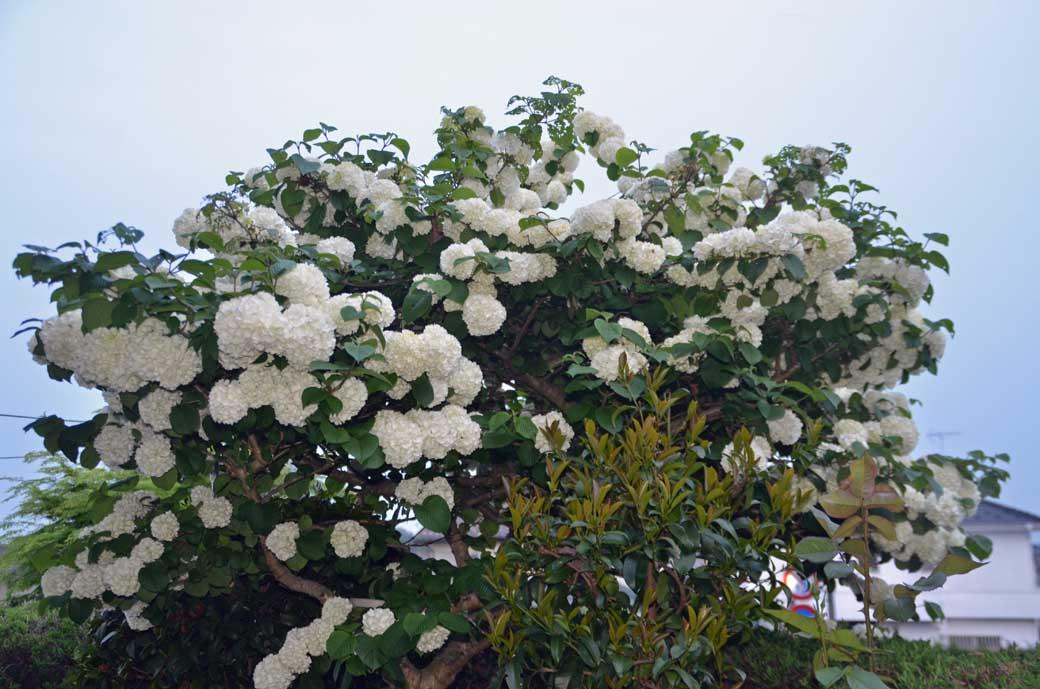 D70_3096庭の花