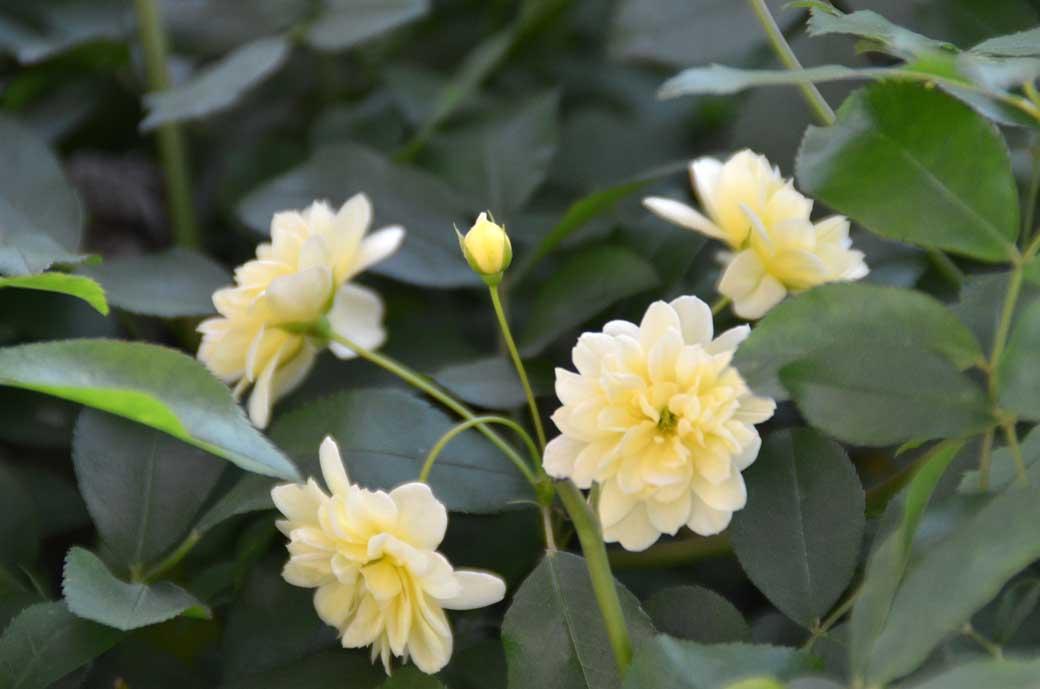 D70_3017庭の花