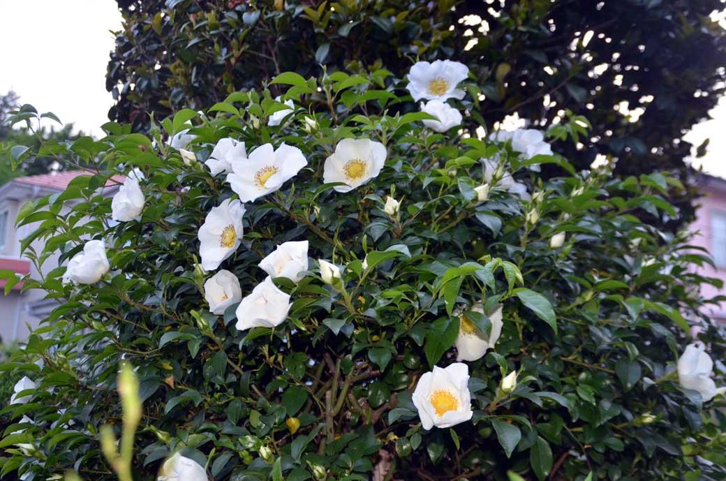 D70_3075庭の花