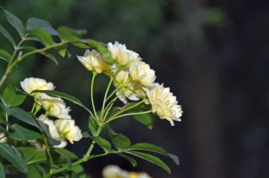 D70_3087庭の花