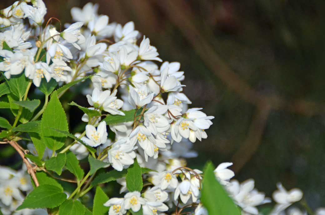 D70_3089庭の花