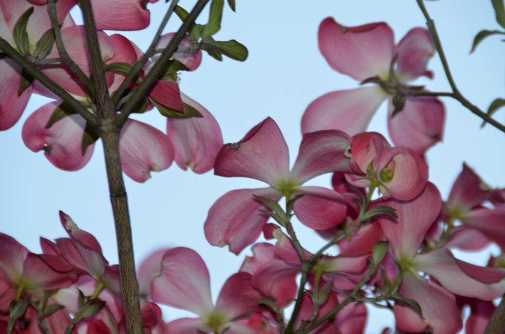 D70_3104庭の花