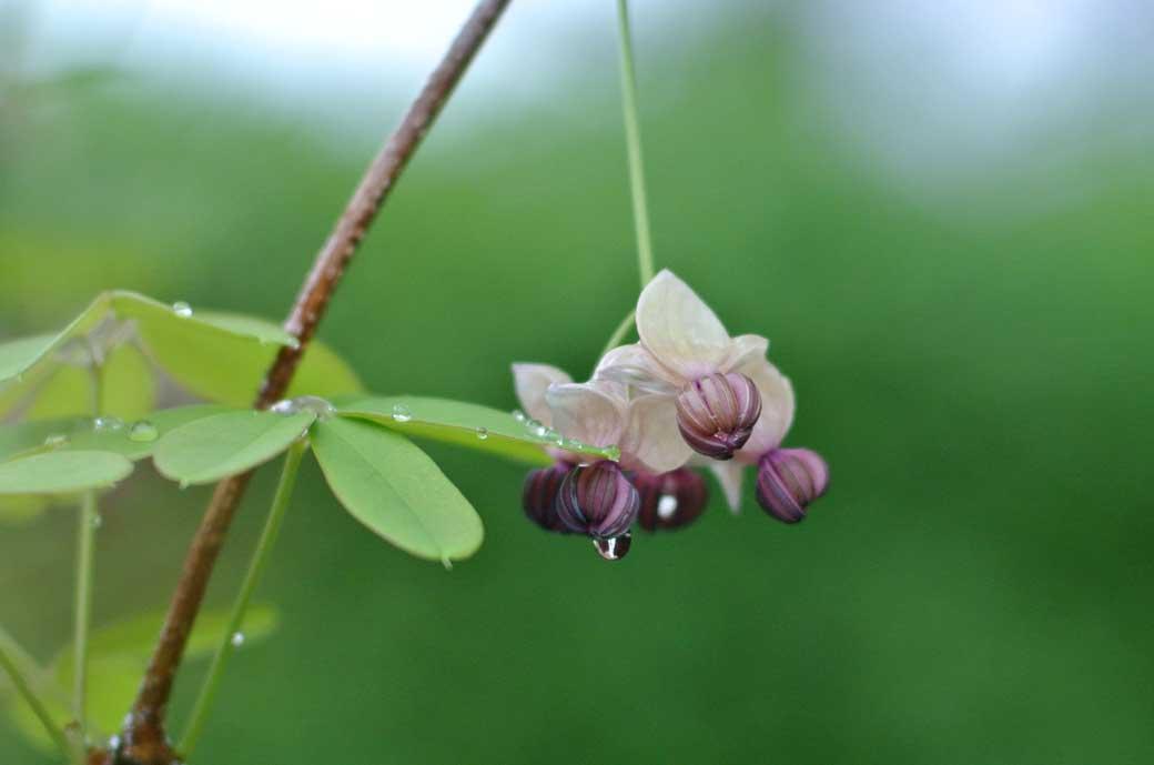 DSC_7656庭の花