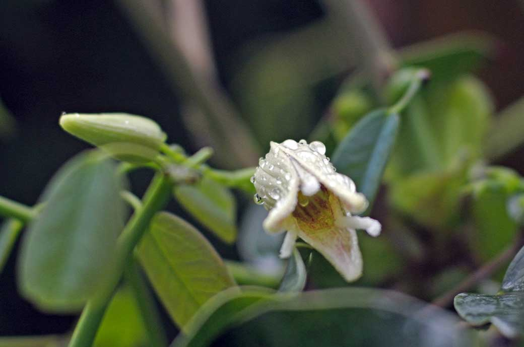 DSC_7710庭の花