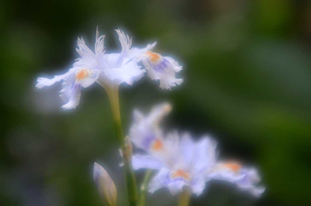 D70_2980庭の花