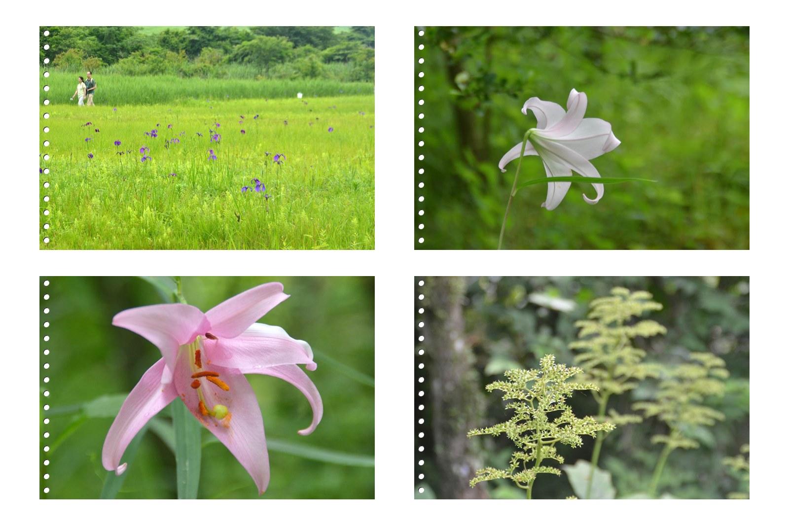 page1箱根湿性花園