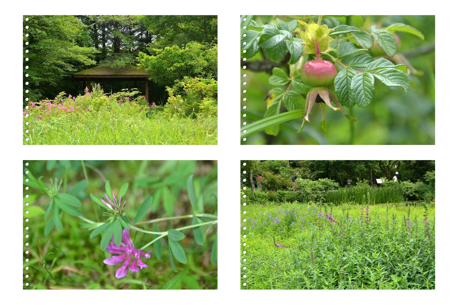 page2箱根湿性花園