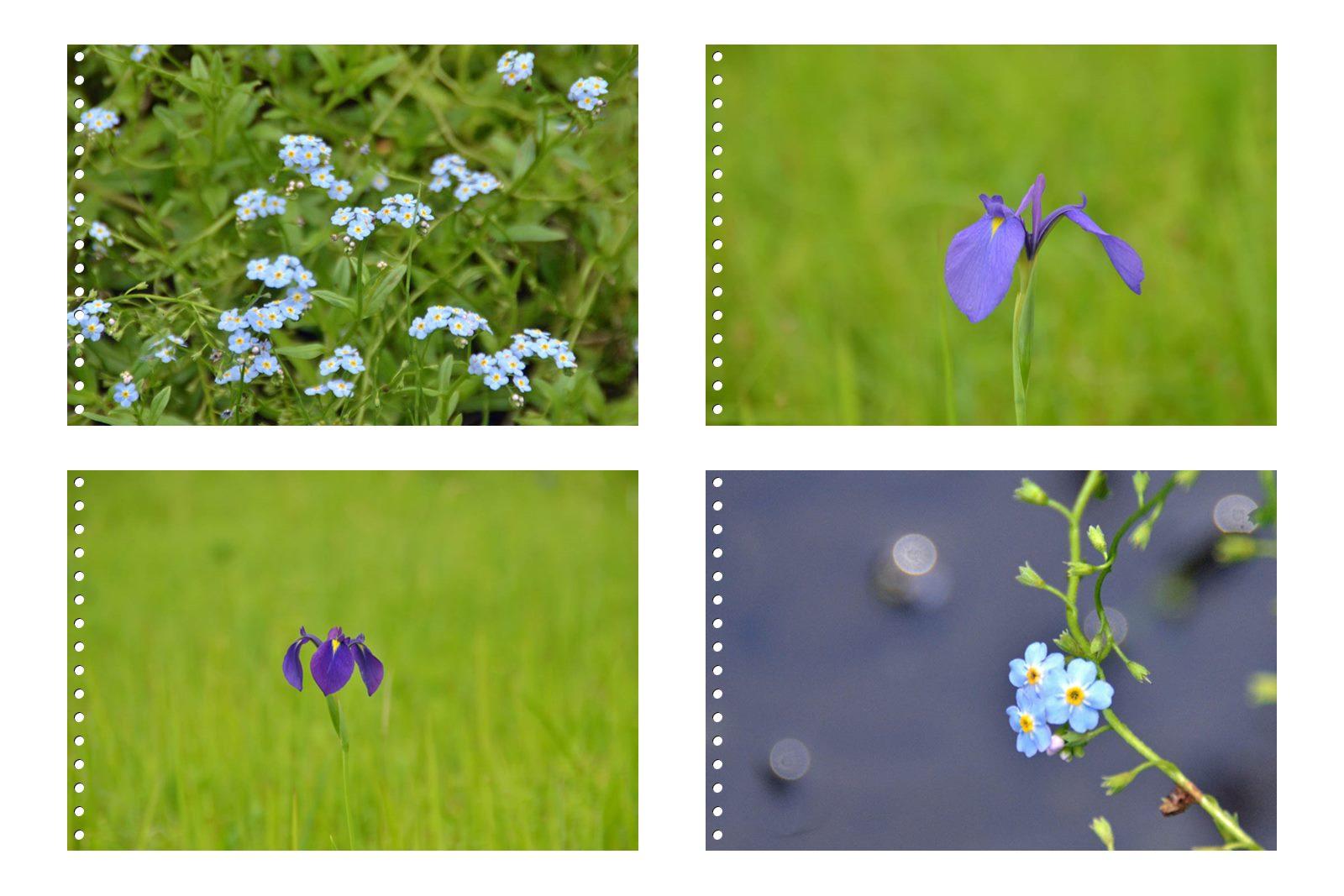 page3箱根湿性花園